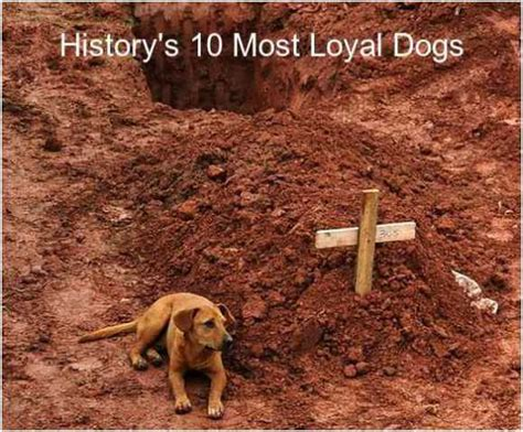loyal to the end beyond history s 10 most faithful