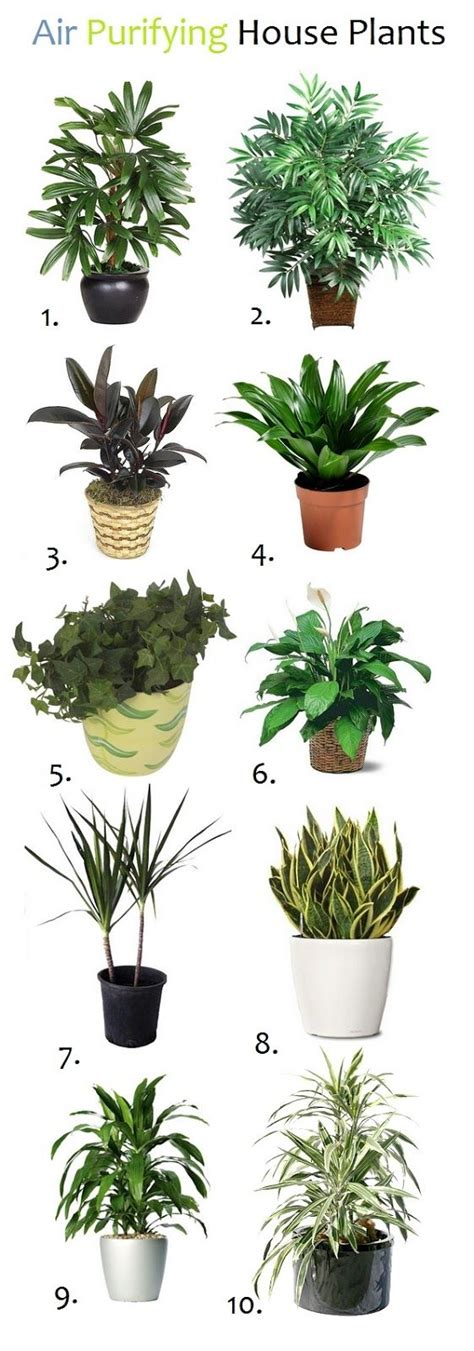 home plant 10 air purifying house plants garden indoor plants