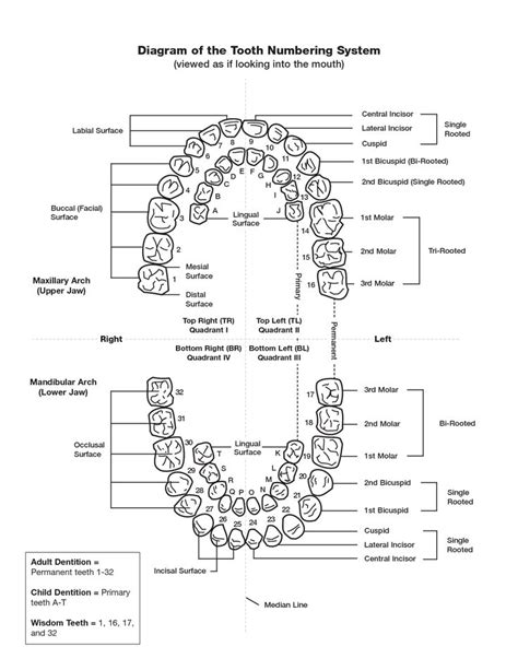 periodontal chart template tooth numbering chart pdf scope of work template
