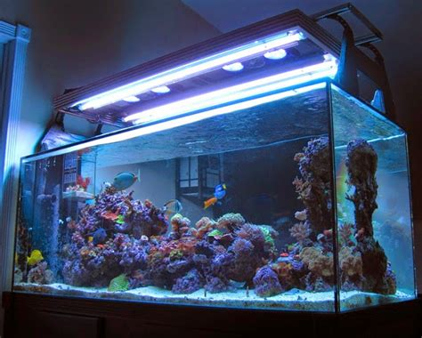 t5 reef lighting bulbs led and t5 hybrid joe s quot quot lighting system