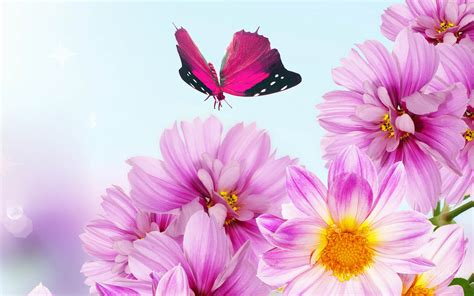 Pictures Of Pink Flowers - wallpapers pink flowers wallpapers