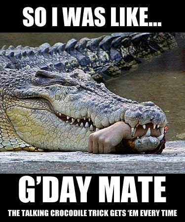 Alligator Meme - crocodile meme 28 images alligator memes imgflip