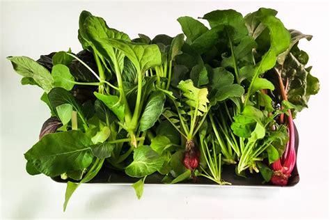 grow a vegetable garden how to grow a vegetable garden from food scraps corner