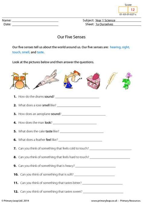 new year activities for fives 226 best images about the five senses on