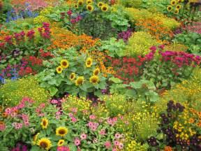 Flowers In A Garden Photo Log Hamilton Taupo Wellington