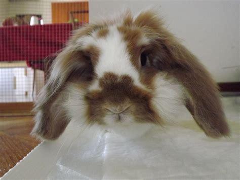 come posso cucinare il coniglio come una pastiglia al coniglio medicine in