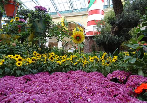 Bellagio Flower Garden Bellagio Conservatory Botanical Gardens Summer Garden Las Vegas Top Picks