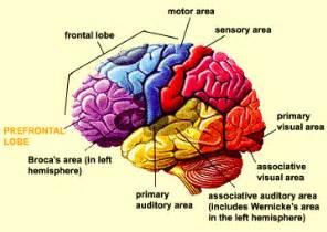 science alive memory