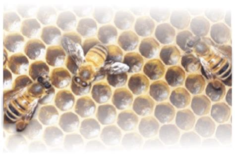 quanto misurano gli angoli interni di un triangolo api