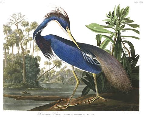 all of audubon s birds of america in one high resolution