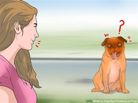diabetes in pugs how to treat eye problems in pugs with pictures wikihow
