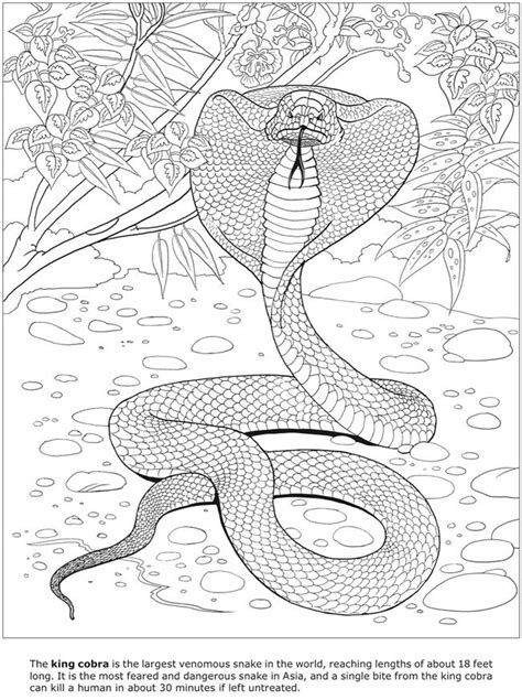 coloring pages of dangerous animals 84 beste afbeeldingen van 3 d coloring book