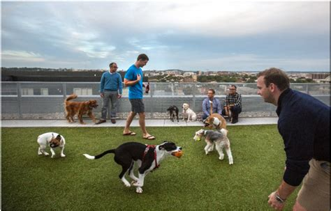 places to pet puppies synthetic turf roof top parks attracts apartment customers in dc