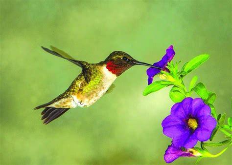 time  put  hummingbird feeders  ogle