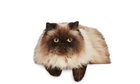 cat health dewormers vitamins supplements  cats
