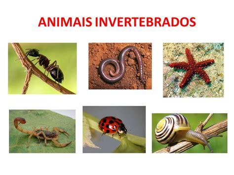 fotos animales invertebrados invertebrados 53608 loadtve