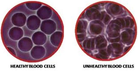Live blood cell analysis training