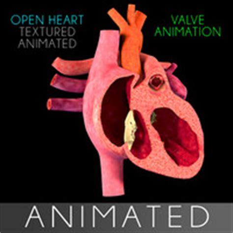 c section animation body reference anatomy veins obj