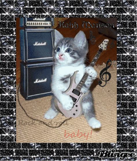 cat wallpaper rolls cat rock n roll picture 121143824 blingee com