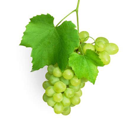 uvas blancas imagenes distribucion de uvas blancas frutas ramirez