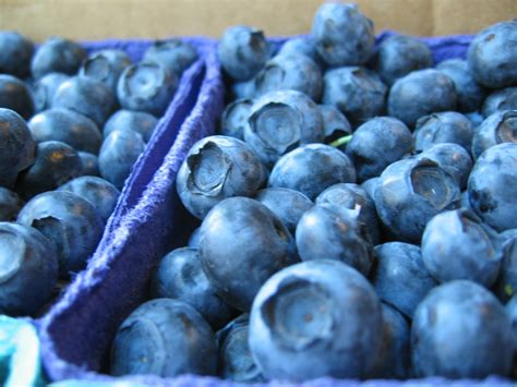 file blueberries in market close up jpg wikimedia commons
