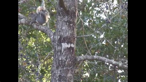 how to hunt squirrels in your backyard how to hunt squirrels in your backyard 28 images nuts