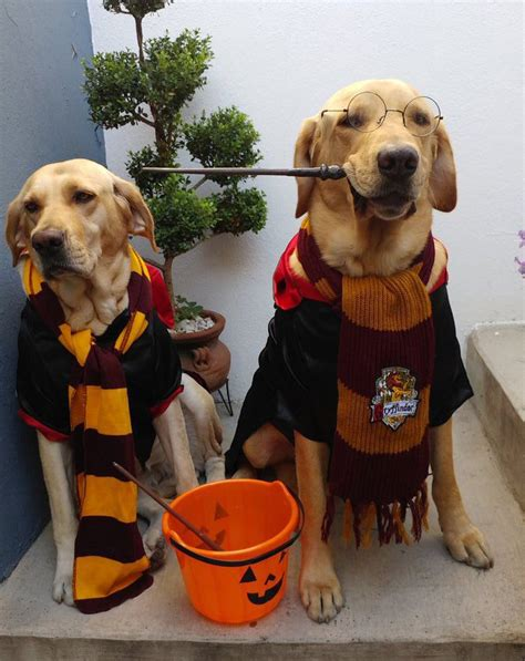 harry s dogs harry potter costume harry potter dogs harry beds and costumes