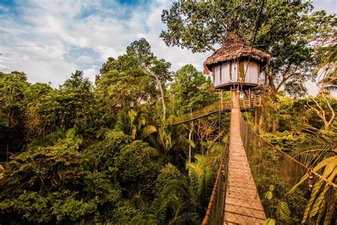 real treehouse treehouse jungle lodge in peru rainforest cruises youtube