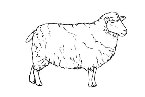 how to a sheep how to draw a sheep draw central