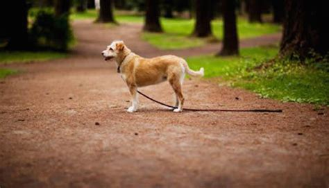 dogs finding dogs this smartphone app is helping lost dogs find their way home barkpost