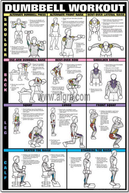 dumbbell workout chart back and shoulder workouts