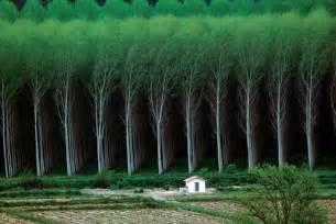 Homesick Game man made forest tree farm pics