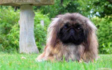 imagenes de animales japoneses nombres chinos para perros con significado