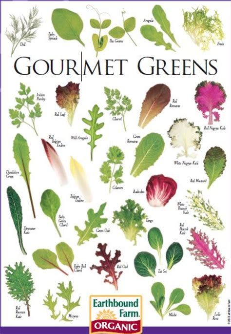 types of lettuce to grow food charts pinterest