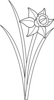 Daffodil Flower Outline by Free Single Daffodil Coloring Pages