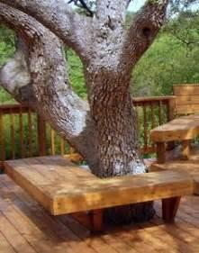 tree trunk stool nz tree seats benches on tree seat tree bench