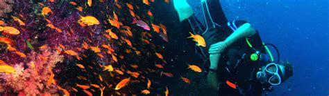 scuba dive trips auckland scuba diving trips auckland scuba