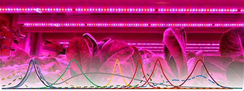leds  future  horticultural lighting wuerth