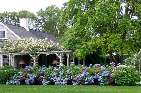 significato fiore ortensia ortensie significato ortensia il significato dei fiori