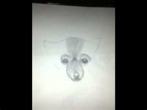 how to draw a pomeranian pomeranian funnydog tv
