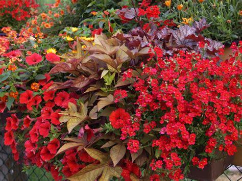 pflanzen für garten balkon bepflanzung idee