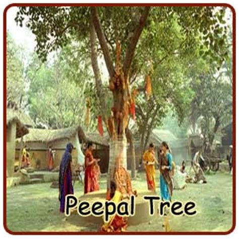 what is the significance of tree significance of circumambulating the peepal tree indianmirror