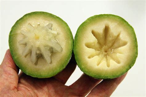 Aple Syar I apple facts and health benefits