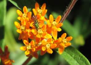 what colors are bees attracted to whole dude whole colors bhavanajagat