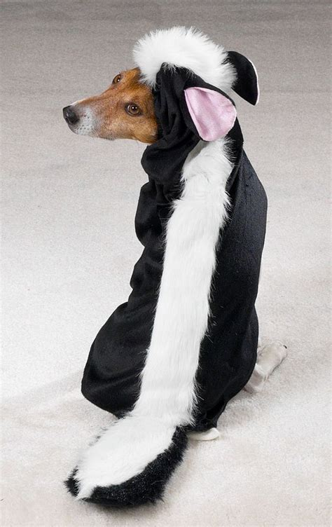 skunk dog  honor  national dress  pet  day   crippen buick gmc mazda volvo