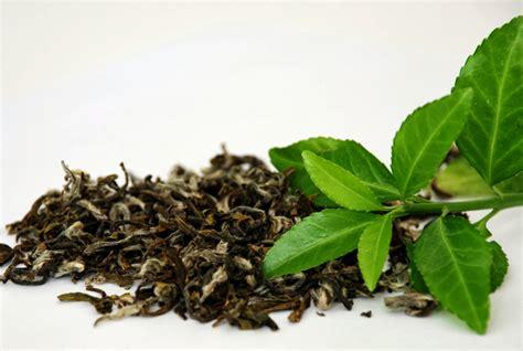 Dan Khasiat Teh Hijau 15 manfaat dan khasiat daun teh hijau untuk kesehatan