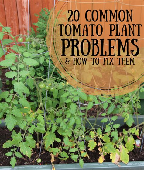 common house plants problems the 25 best common house plants ideas on house plant care plant pests and house