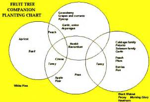 fruit tree spacing chart planting companion vegetables and herbs and fruit tree