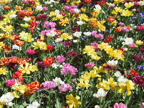 di fiore distese di fiori