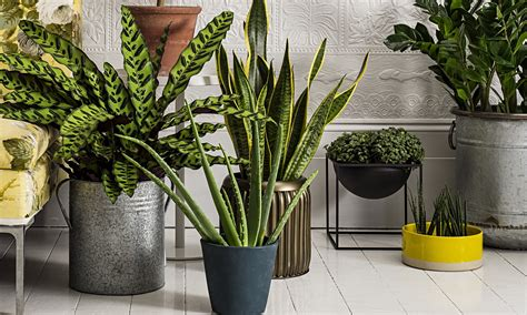 plants for home how to make the most of house plants life and style